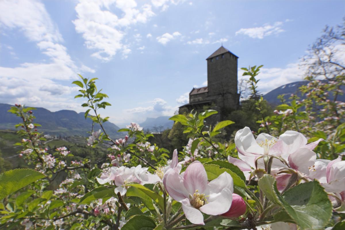 Castello Tirolo vicino a Merano